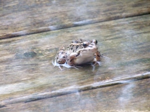 Shelter from the seemingly never ending weekend rain, and i though toads liked it wet.