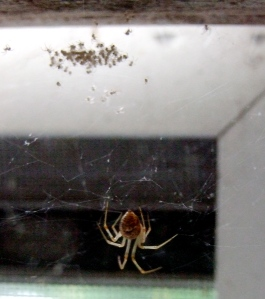 Only little me and my fifty or so spiderlings left