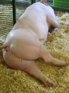 I really felt like this pig needed some pants. It was just a little too human!