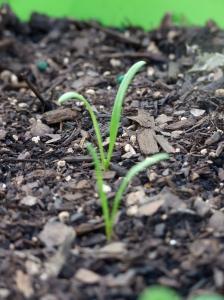 Sproutin'